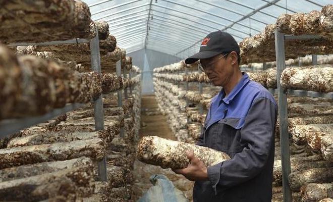 甘肃陇西:技术指导助力农民脱贫