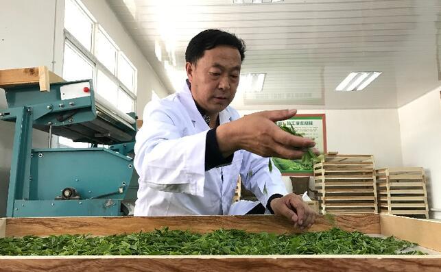 西北产茶区:茶香馥郁茶农富