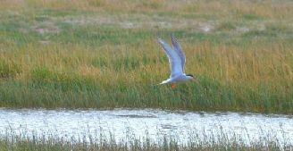 苏干湖湿地候鸟翻飞